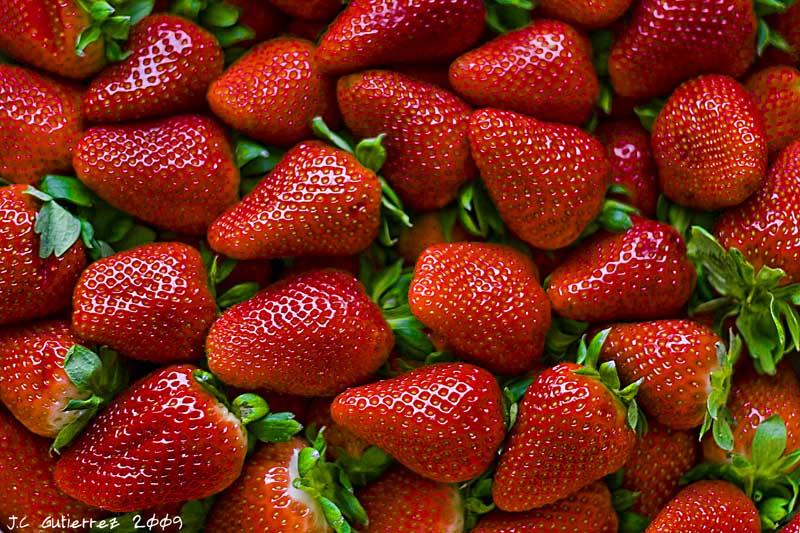 La empresa Gorofres ya está sembrando fresas en el Huelva capital.