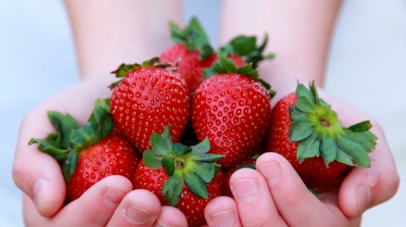 Científicos españoles e italianos estudian la creación de cremas solares de fresas