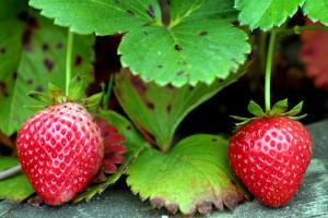 Las fresas, un producto estrella de la provincia de Huelva. / Foto: www.flickr.com.