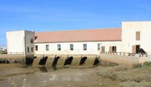 Platalea pone en marcha múltiples actividades durante todo el año en Ayamonte.