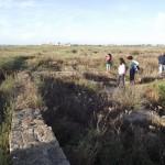 Imagen de la isla Saltés. Foto: www.platalea.com.