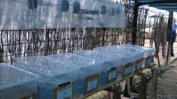 Un proyecto de la Universidad de Huelva investiga los beneficios de las almejas medicinales a través del aporte de selenio