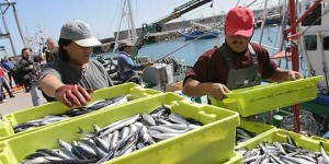 Isla Cristina reafirma su apoyo a la pesca del Boquerón y la caballa