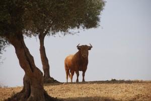 Millares está implicado en el proyecto de 'Territorio Toro'.