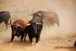 La ganadería tiene toros de distintos encastes.