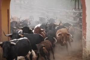 Toros de la ganadería de Manuel Ángel Millares.