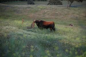 El empresario cree que el toro y la dehesa deben ponerse en valor.