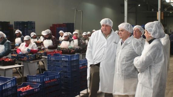 La planta de Iberfruta en La Palma triplica su producción y eleva a 250 el número de empleados