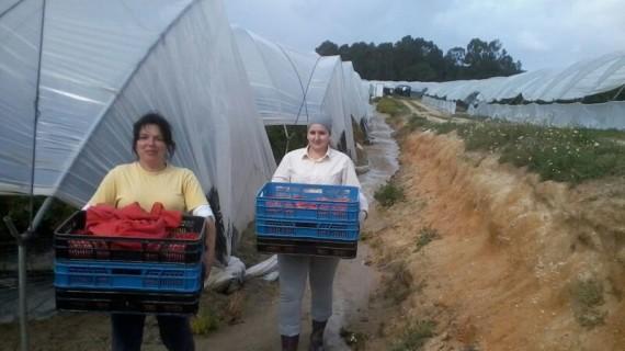 La publicación 'El sector agrario en la provincia de Huelva' se presenta en la Fundación Caja Rural