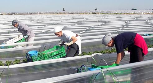 Campaña agrícola. / Foto: www.donana.es
