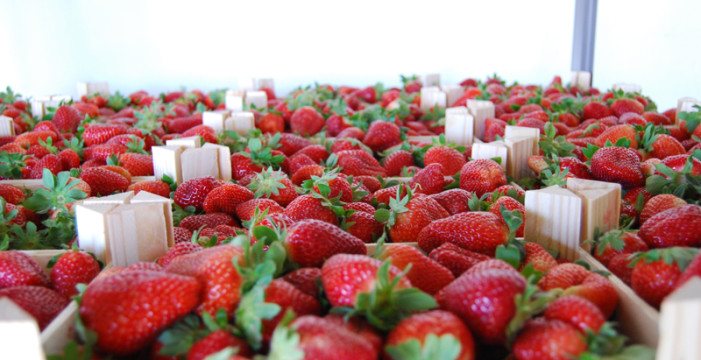 Seis empresas asociadas y Freshuelva volverán a mostrar sus productos en Fruit Attraction en Madrid