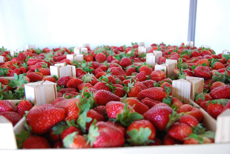 La fresa, el cultivo mejor valorado.