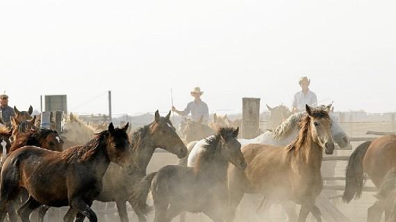 La Saca de las Yeguas, la tradición más antigua de Andalucía, cumple 510 años