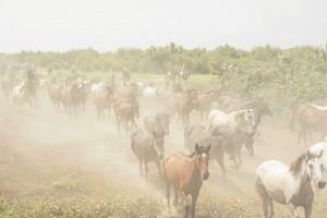 Almonte ha organizado este año la I Jornada Monográfica de la Yegua Marismeña en el marco de la celebración de la Saca de las Yeguas. / Foto: Pedro Miguel Aceitón (Asociación de Fotógrafos de Almonte).