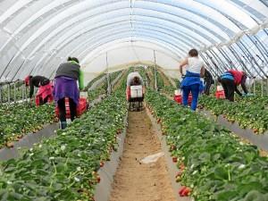 Las ayudas van destinadas a agricultores de frutas y hortalizas.