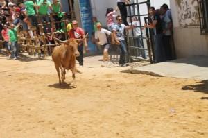 Los ejemplares de la ganadería de Millares han sido los protagonistas de las penúltimas capeas sanjuaneras.
