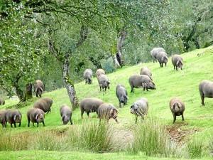 La ganadería también es una de las preocupaciones de Asaja Huelva.