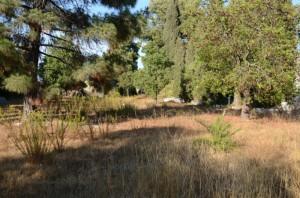 Zona del Cementerio Británico de Huelva.