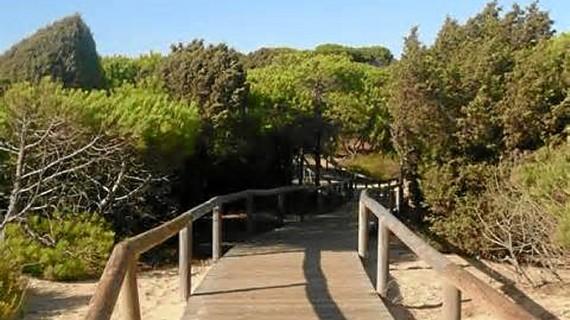 Mejoradas las pasarelas del Paraje Natural Enebrales de Punta Umbría para favorecer el acceso a la playa y proteger el entorno