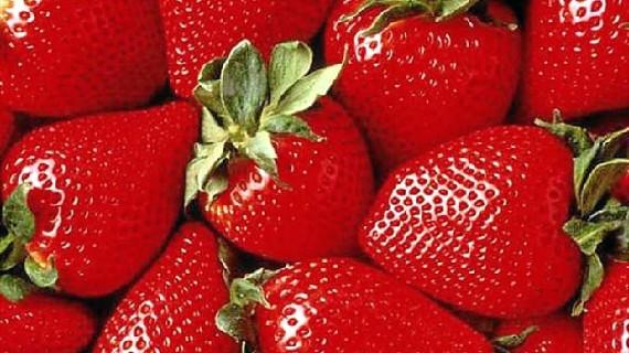 Fresas sin residuos con control de plagas