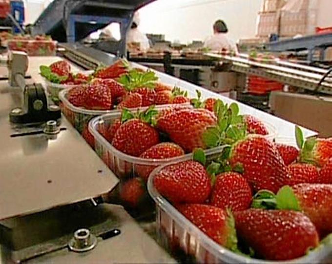 La mayoría de la fresa de Huelva llega fundamentalmente a países como Francia, Alemania y Gran Bretaña. / Foto: besana.es.