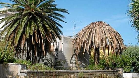 Freno a la plaga de picudo rojo en las palmeras de Huelva
