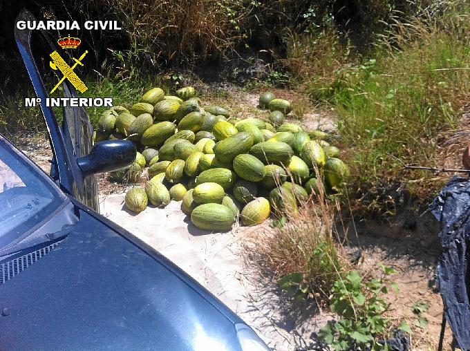 La fruta ha sido recuperada por la Guardia Civil.