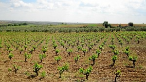 La Ruta del Vino del Condado de Huelva, un lugar para perderse.