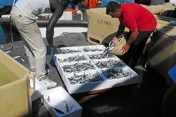 Isla Cristina, a la cabeza de transformación pesquera.