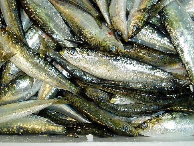 Las jornadas gastronómicas del pescado azul reúnen a cuatro chefs de la provincia en Ciquitrake