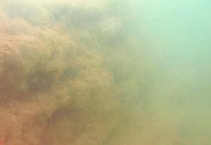 Imagen tomada en el fondo del mar en la zona observada.