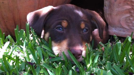 Unas 120.000 mascotas, un 11% más que en 2011, aparecen inscritas en el Registro de la Junta de Animales de Compañía en Huelva