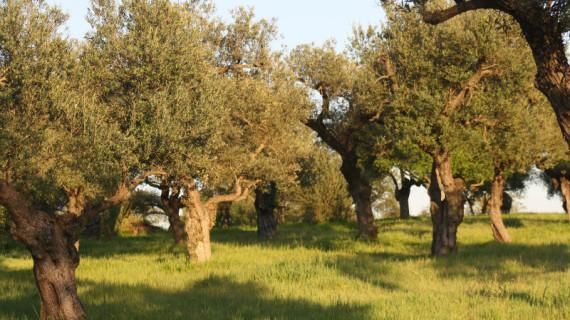 Huelva ocupa la segunda posición de Andalucía en agricultura ecológica con una superficie de 180.345 hectáreas