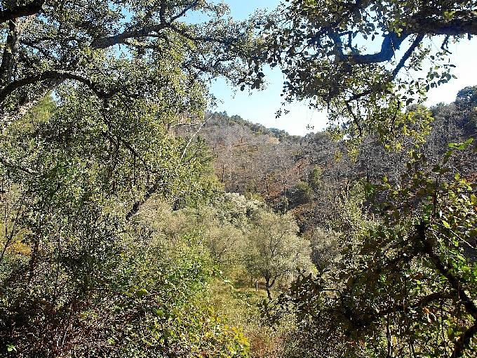 La Sierra de Aracena y Picos de Aroche, un paraiso. / Foto: FotosImagenes.org.