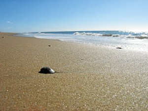 Imagen de la playa del Parador de Mazagón.
