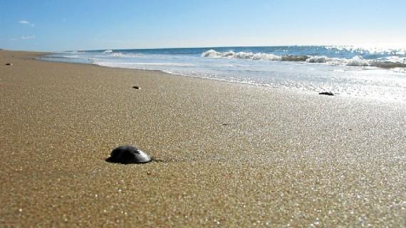 La playa del Parador de Mazagón renueva la 'Q' de calidad turística