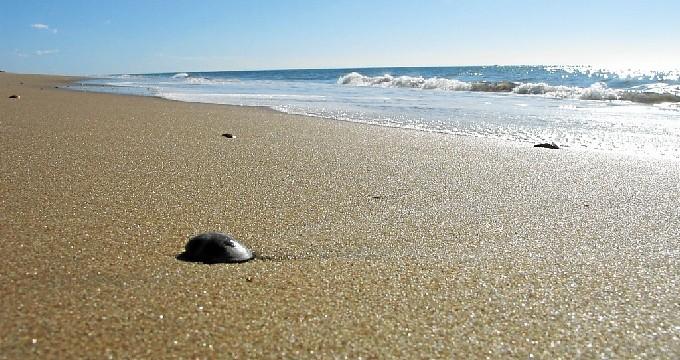 Las playas de Huelva, aptas para el disfrute con  unas condiciones sanitarias adecuadas