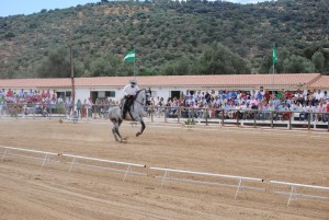 En este 2013 la Fegar acoge la final del XXXV Campeonato de Andalucía de Doma Vaquera.