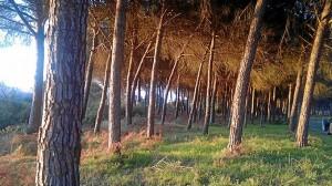 Doñana está muy relacionada con la civllización tartésica.