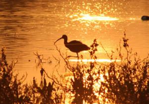 Doñana, un paraíso ornitológico. / Foto: doñanavip.com.