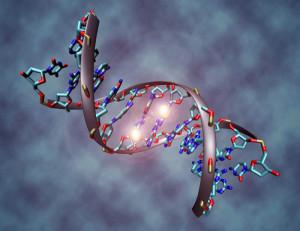 Cifrar el genoma será mucho más barato en el futuro. / Foto: www.lookfordiagnosis.com