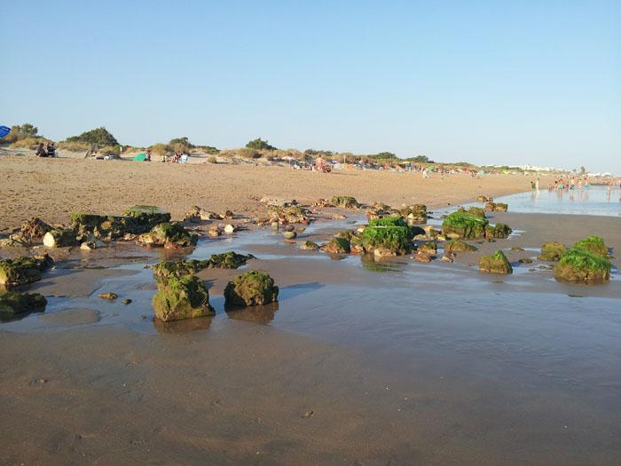 Los bloques de piedra que han emergido en la playa, cubiertos por las algas marinas.