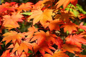 El otoño es una temporada que tiene mucho que ofrecer