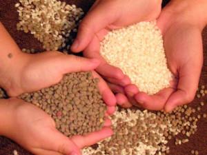 Los alimentos hay que depositarlos en la Biblioteca Provincial. / Foto: ampa-elrecreo.blogspot.com