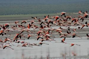 Los flamencos, en los humedales de Doñana.