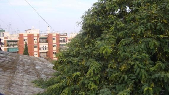 Huelva protege la cubierta del antiguo cuartel de Santa Fe con la poda de los árboles colindantes