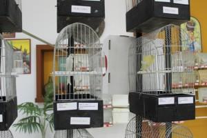 La muestra contempla variadas especies y distintas familias dentro del elemento común, en este caso el canario.