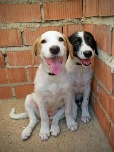 Luna y Morris en el refugio.