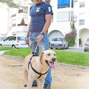 Después de encontrarlo por las calles de Moguer, este perro ha sido seleccionado para ayudar a los Bomberos de Huelva en sus labores de rescate. / Foto: Puntanimals.