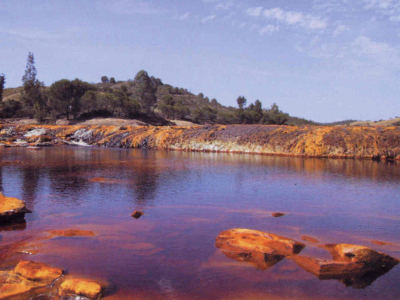 Las propiedades específicas del río Tinto hacen posible la composición de esta microalga estudiada.
